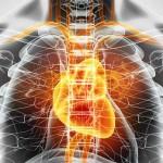 Prévenir les maladies du coeur
